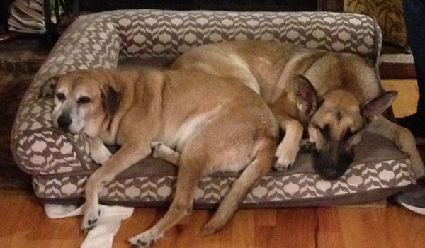support team dogs - Tom & Elsa